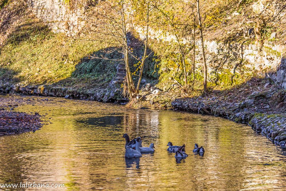 Patos de San Cayetano en Potes